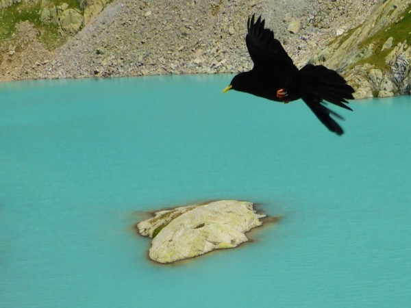 THE COMPLETE TOUR OF MONT BLANC self-guided